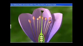 CBSE Class 12 Biology, Sexual Reproduction in Flowering Plants-4, Outbreeding Devices