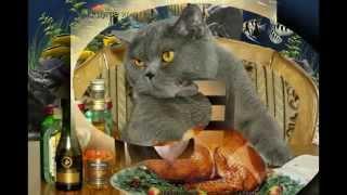 посоветуйте сухой корм для кошки