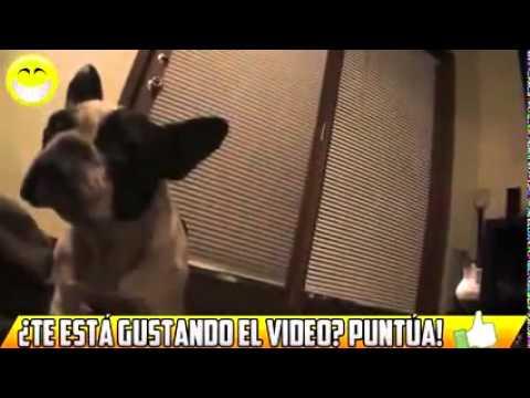 Videos de risa   Perros asustados por pedos 2014 Low