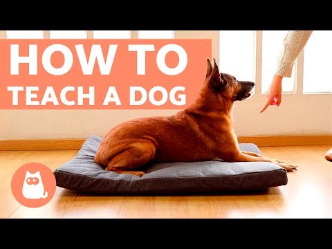 How to Teach a Dog to Go to Bed