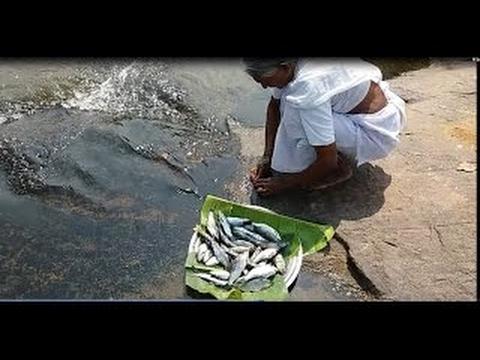 My Grandma Cooking Fresh River Fish in My Village Near River Side Food Money Food