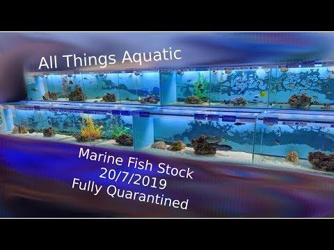Marine Fish System Tour 20/7/2019 - Fully Quarantined