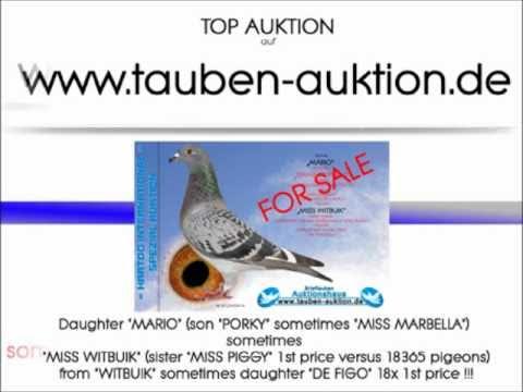 Tauben Auktion De