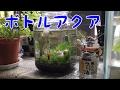 ボトルアクアの紹介【メダカ・ミナミヌマエビ】 の動画、YouTube動画。