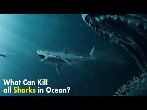 What If All Sharks Disappeared?