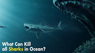 What If All Sharks Disappeared