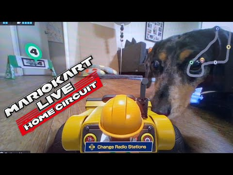 Mario Kart Live: Home Circuit - First track WITH DOGS!