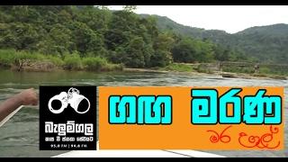 Belumgala 2017-02-21