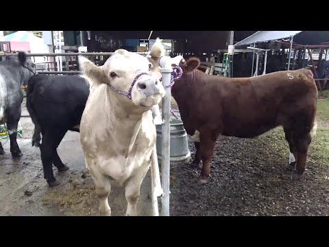 Centre County Grange Fair 2016
