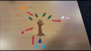 Photosynthese und Zellatmung einfach erklärt!