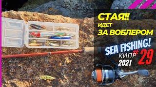 За воблером гонится стая рыбы Мелкие крэнки в море Рыбалка на Кипре Часть 29 Сезон 2021