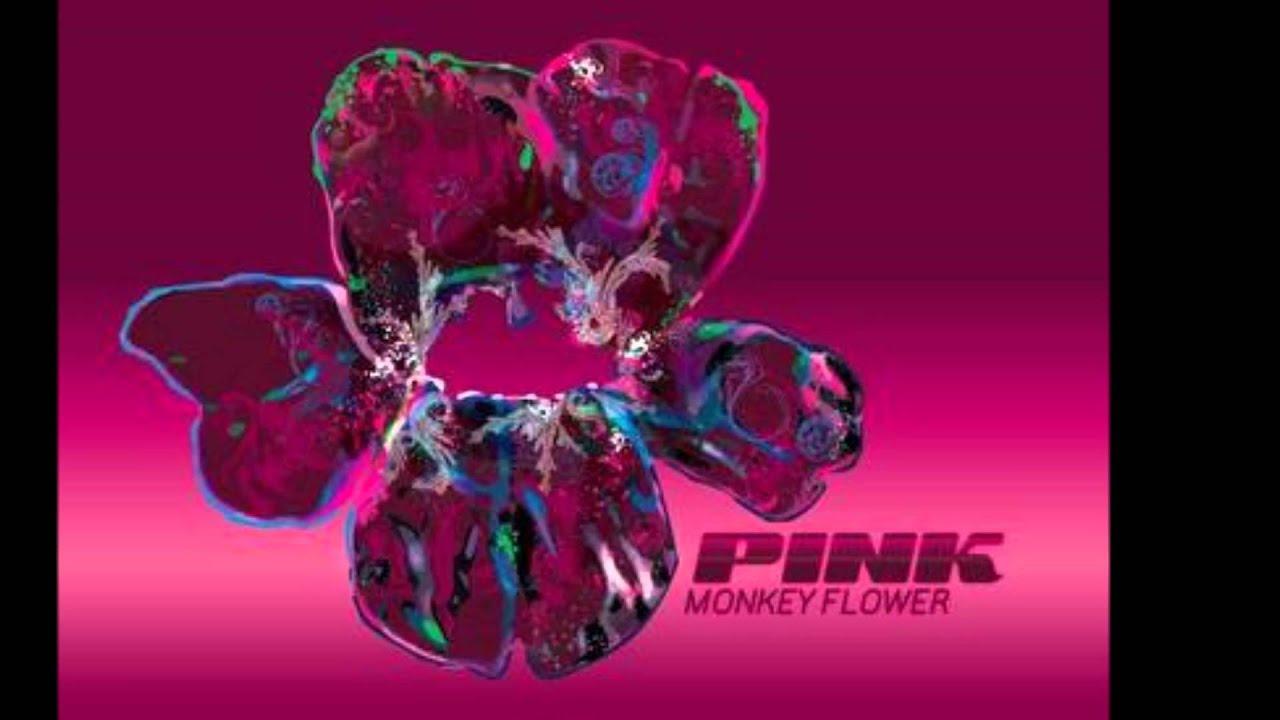 Pink Monkey Flower Liquid Monkey Youtube