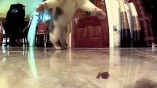 when animals attack gopro compilation