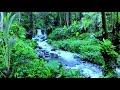 Suara Gemericik Air Mengalir Jernih Untuk Terapi Burung Meditasi Dan Relaksasi  Mp3 - Mp4 Download