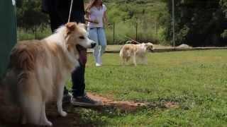 Kynagon Dog Trainers Academy 2014-15!!  Hq