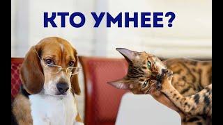 Кто умнее, кошки или собаки, большие или маленькие? Загадочные существа на кухне.