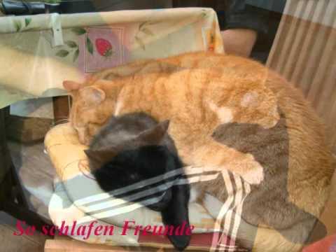 Queen - Diliah - Cat -Freddie Mercury