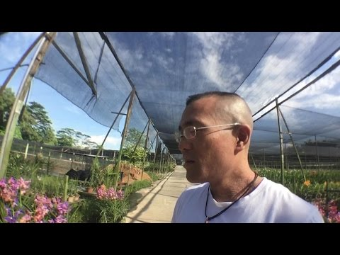 Vlog 2: God builds the beautiful story of your life (Orchid farm in Singapore)