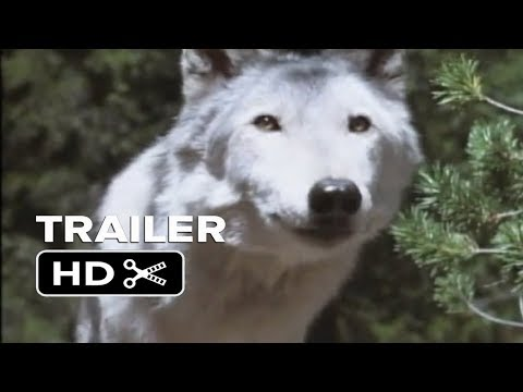 Trailer do filme White Wolves III: Cry of the White Wolf