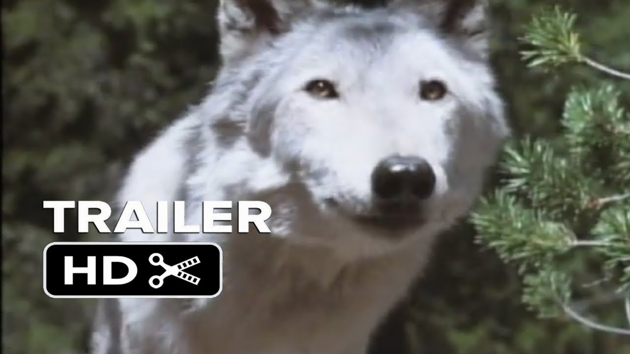 Download WHITE WOLVES III: CRY OF THE WHITE WOLF (2000) Official Trailer