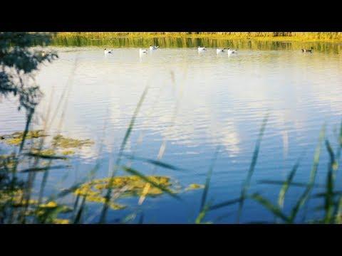 Футаж — Птичья гавань. У пруда. Футажи (footage) красивая природа [FullHD]