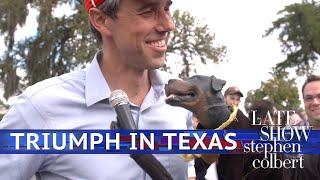 Triumph Der Beleidigung Comic-Hund Erfüllt Beto Und Cruz