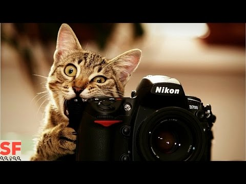 Top 10 Funniest Cat Fails Caught On Video (Compilation)