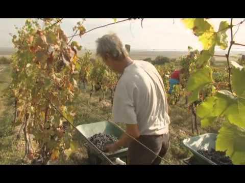 Wines of Hungary - Northern Transdanubia Wine Region