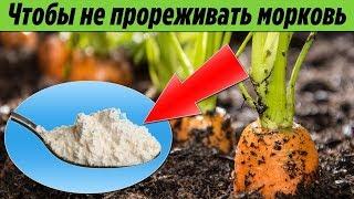Теперь МОРКОВЬ можно НЕ ПРОРЕЖИВАТЬ Интересный и ПРОСТОЙ способ посадки моркови В ОТКРЫТЫЙ ГРУНТ