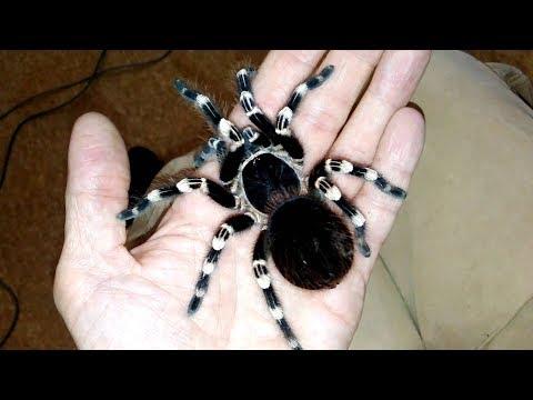 УЗНАЙ Как Вести Себя При Виде ПАУКА // народные приметы о пауках