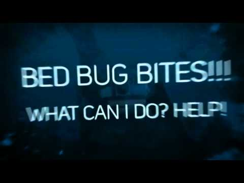 how to kill bed bugs phoenix az-AZEX Pest Solutions