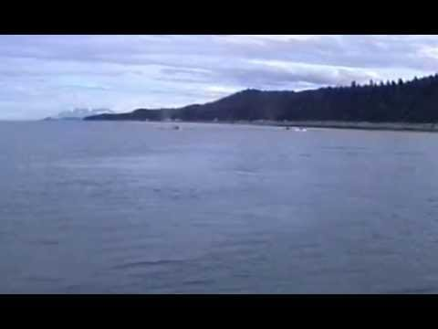 Whales in the Lynn Canal