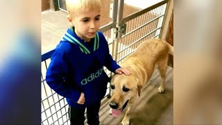7YearOld Boy Creates An Underground Railroad That Saves 1000s Of Dogs From Heartbreaking Fate