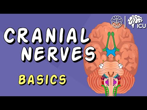 Cranial Nerve BASICS - The 12 Cranial Nerves And How To REMEMBER Them!