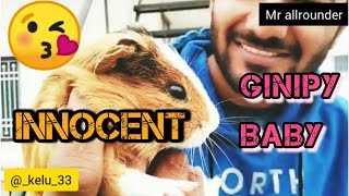 Best Pet Animal For Home. #Ginipy. 🐹🐹  GINIPY KE BACCHE. || PART:1