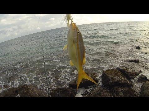 Multi-Species Surf Fishing In Puerto Rico