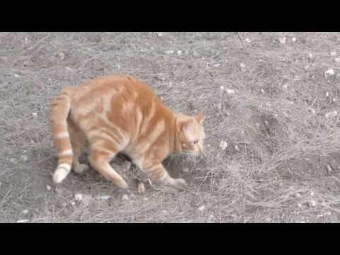 Cute Orange Cat Poops
