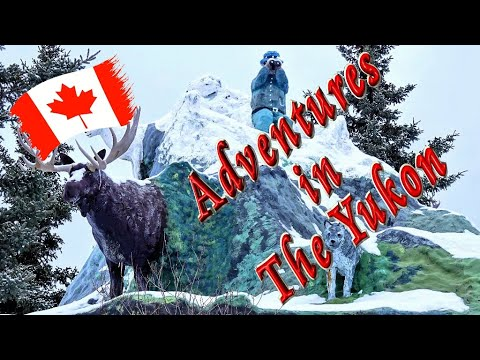 ⛄ Winter Adventures In The Yukon