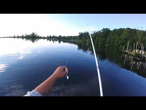Aquia Creek Snakehead Fishing (12 POUNDER )