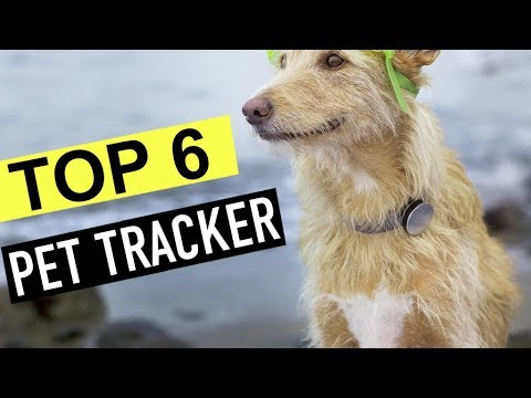 BEST 6: Pet Tracker