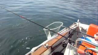 Pesca sul lago di Como. Trote lacustri.avi