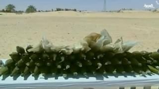 عملية #الجيش في للجزائر لملاحقة الإرهاب