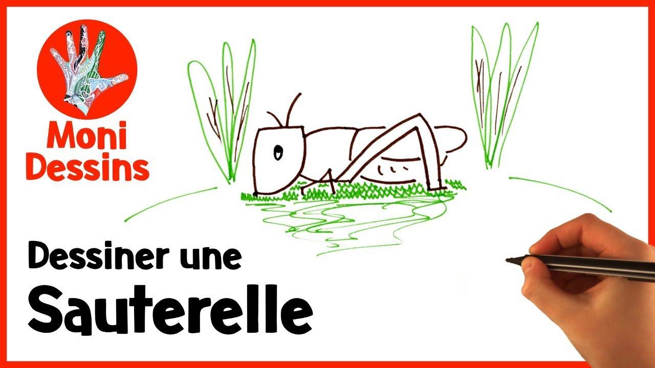 Snap comment dessiner une cigale tape par tape photos on pinterest - Comment dessiner une fourmi ...
