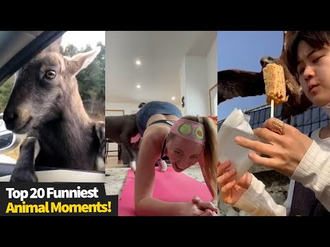 Funniest Animal & Pet Videos, Try Not To Laugh At These #1