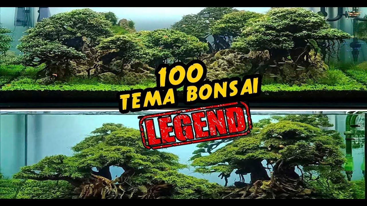 100 TEMA BONSAI AQUASCAPE TERBAIK !!! @nickz aquascape ...