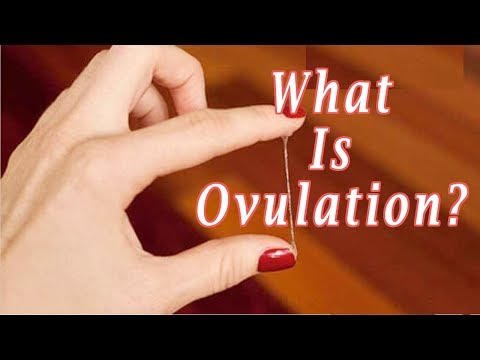 What Does Ovulation Mean
