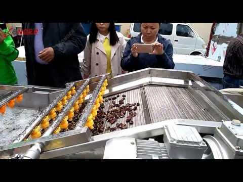 Air Bubble Fruit Vegetable Washing Machine|Leafy Vegetable Cleaning Machine @longer-machinery.com