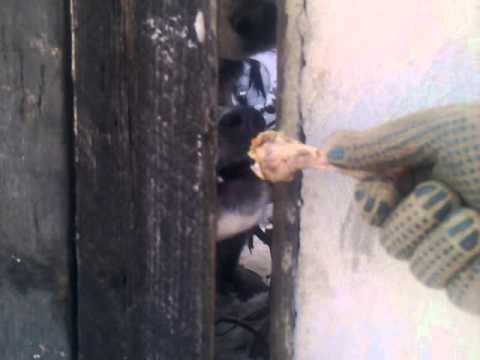 caine prost pe strada Mentiunii (Bucuresti)