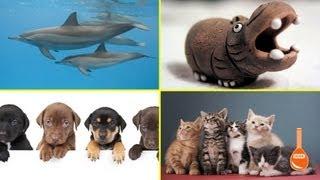 The Origins of Cute
