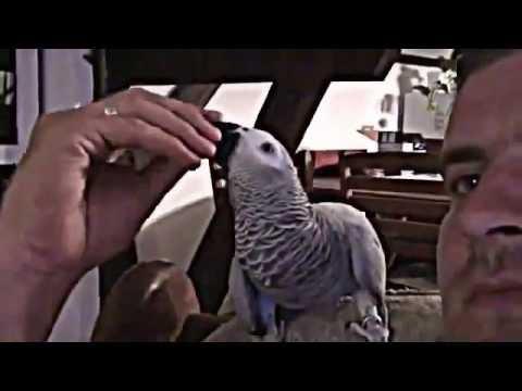 Papuga genialnie gada po polsku! TO NASZ SŁAWNY ARTUREK !! :) Padniesz jak usłyszysz.